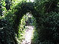 Natural Ivy arch over path near Findon Place - geograph.org.uk - 1511725.jpg