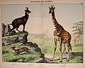 Natural history of the animal kingdom for the use of young people (Plate XXII) (5974374243).jpg
