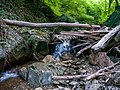 Nature, Oguz ( 1090501).jpg