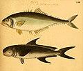 Naturgeschichte in Bildern mit erläuterndem Text (Taf. LXII) (6059214456).jpg
