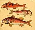Naturgeschichte in Bildern mit erläuterndem Text (Taf. LXVII) (6058668041).jpg