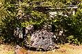 Neandertal01213000.jpg