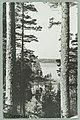 Nervanderin kumpu, Lammasharju, Tuunaansaari, Vaahersalo, Th. Sunell 1920s–1930s PK0167.jpg