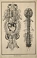 Nervous system after Vieussens (fig. 1); brain and spinal co Wellcome V0007827.jpg