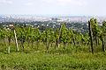 Neuberg Wien Weingaerten.jpg