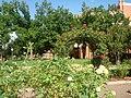 Norman, OK USA - University of Oklahoma - panoramio (6).jpg