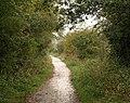 Norton Radstock Greenway - geograph.org.uk - 1528169.jpg