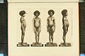 Nova Guinea - Vol 3 - Plate 35.jpg