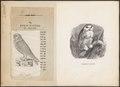 Nyctea nivea - 1700-1880 - Print - Iconographia Zoologica - Special Collections University of Amsterdam - UBA01 IZ18400023.tif