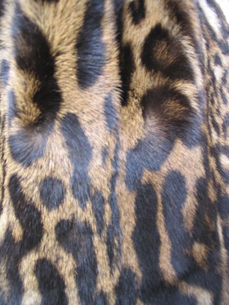 Datei:Ocelot fur coat, cutting2.JPG