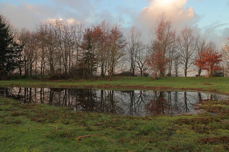 File:Ochtendgloren boven De Famberhorst 02.JPG