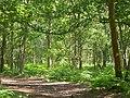 Ockley Common - geograph.org.uk - 187677.jpg