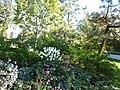 October flowers, 2013 10 22 (2).JPG - panoramio.jpg