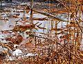 Ohio Valley Mushroom Farm, Acid-Mine Drainage (AMD) (13670953223).jpg