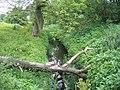 Old Eea Brook - geograph.org.uk - 1343005.jpg