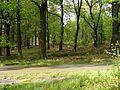 Open bos om wild zichtbaarder te maken langs een pad.JPG