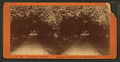 Orange archway in Mr. Ball's place, from Robert N. Dennis collection of stereoscopic views.png