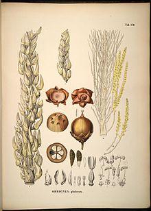 Attalea speciosa - Wikipedia Skin Care Products