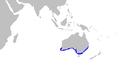 Orectolobus maculatus distmap.png