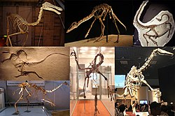 Ornithomimosauria Diversity.jpg