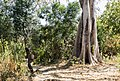 Oromia IMG 5316 Ethiopia (39656142242).jpg