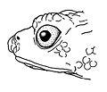 Osornophryne cofanorum male lateral view - ZooKeys-108-073-g010.jpg
