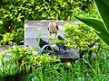 Pássaro 6 - panoramio.jpg