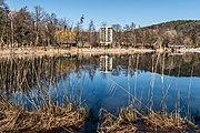 Pörtschach Halbinselpromenade Uferzone mit Schilfrohr 08032017 6490.jpg