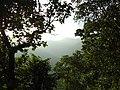 PRISTINE RAINFOREST^SABARIMALA,KERALA - panoramio.jpg
