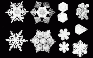 Various snow crystal forms