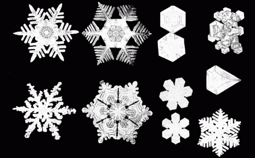 PSM V53 D092 Various snow crystal forms.png