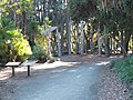 Papua New Guinea Sculpture Garden at Stanford University, front entrance 1.jpg
