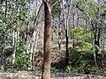 Parambikulam Tiger Reserve - panoramio (10).jpg