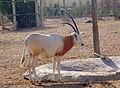 Parc animalier, Friguia, Tunisie, 25 décembre 2015 DSC 1955.jpg