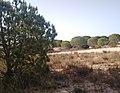 Parque de Doñana 20210610 20.jpg