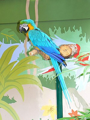 English: Parrot, Longleat safari park, Wiltshi...