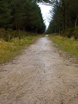 Path to Raptor Viewpoint, Wykeham Forest - geograph.org.uk - 1194254