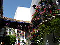 Patios of Cordoba - flowers 5.JPG