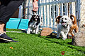 Pawliday Inn Pet Resort 16.JPG