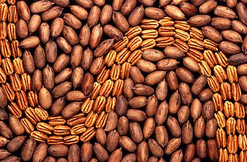 shelled and unshelled pecans