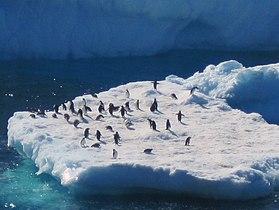 PenguinIceberg.JPG