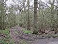 Perimeter ride in Manor Wood - geograph.org.uk - 1805006.jpg