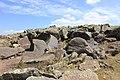 Petroglyphs from Ukhtasar 15092019 (329).jpg