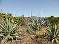 Pflanzen im Naturpark Cabo de Gata.jpg