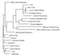 Phylogenetic Tree for LSMEM1.PNG