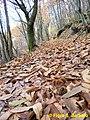 Pietrastornina (AV), autunno 2009. (2).jpg