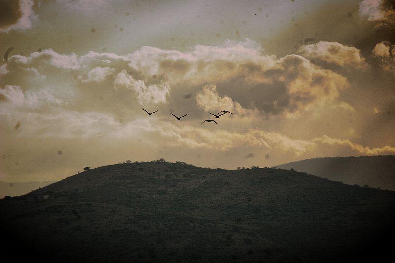 מעוף העגורים לעת ערב