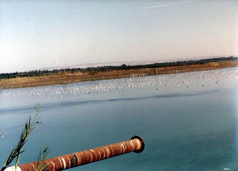 ציפורים על פני המים