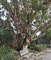 PikiWiki Israel 60854 in the river garden in yavne.jpg