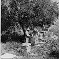 PikiWiki Israel 7835 Gan-Samuel - in the beehive 1943.jpg